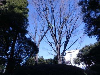 木の手入れ1.JPG